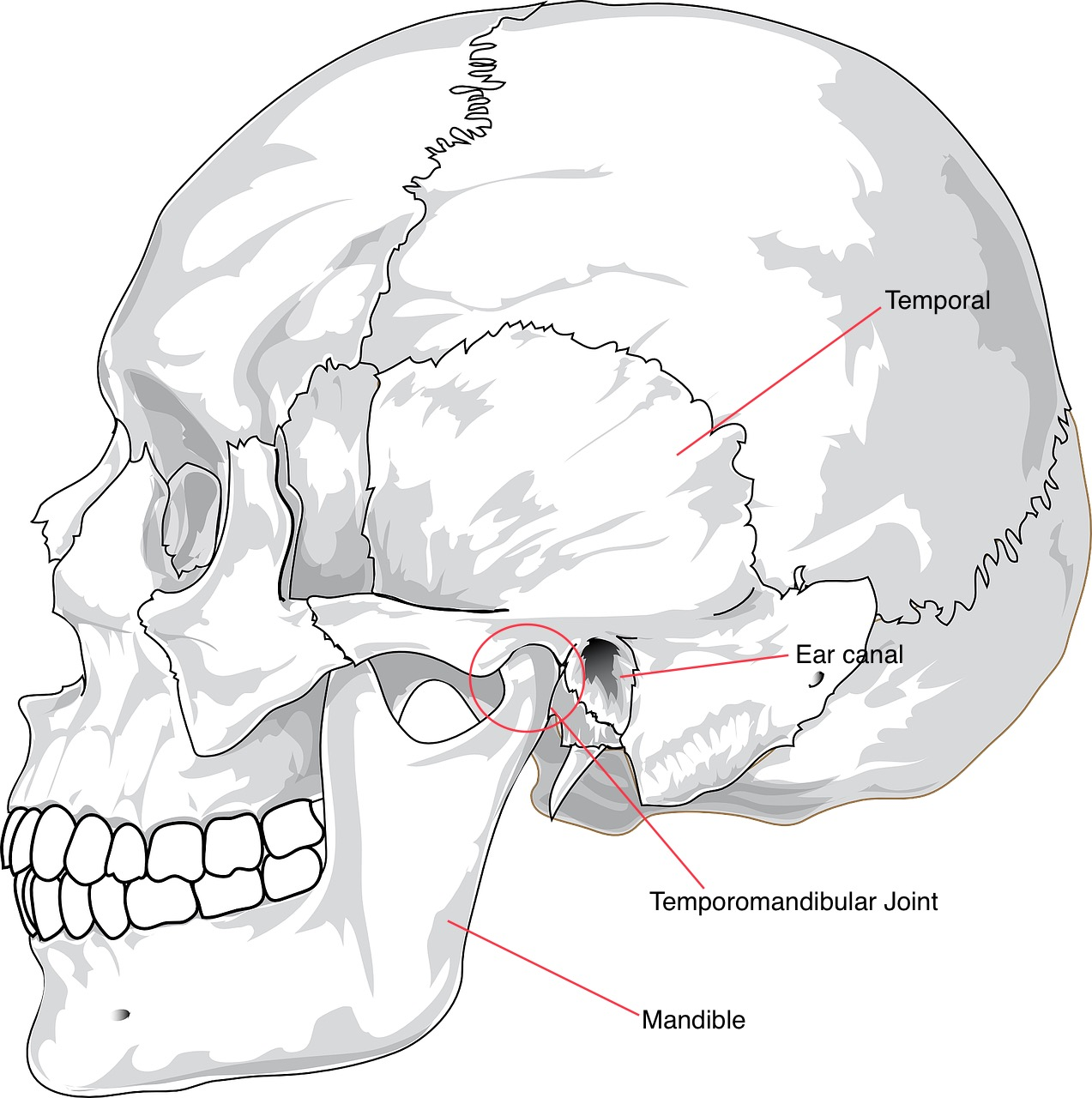 TMJ Troubles and Treatment